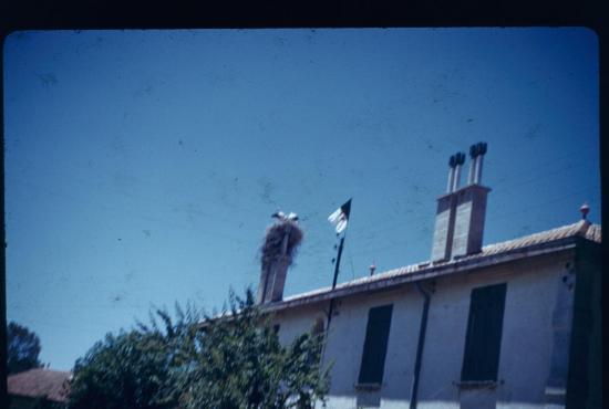 le-drapeau-algerien-avec-le-nid-de-cigogne.jpg